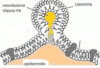 Liposomi